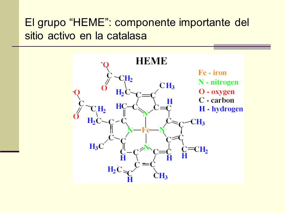 El grupo HEME: componente importante del sitio activo en la catalasa