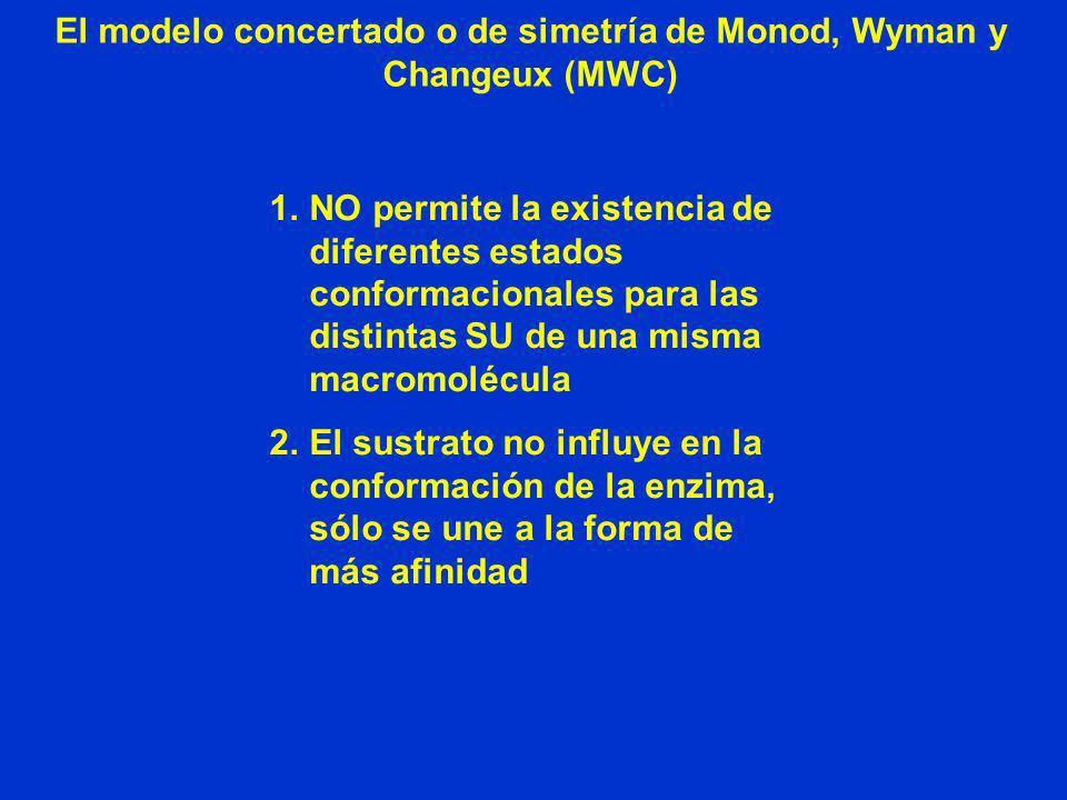 El modelo concertado o de simetría de Monod, Wyman y Changeux (MWC) 1.NO permite la existencia de diferentes estados conformacionales para las distint