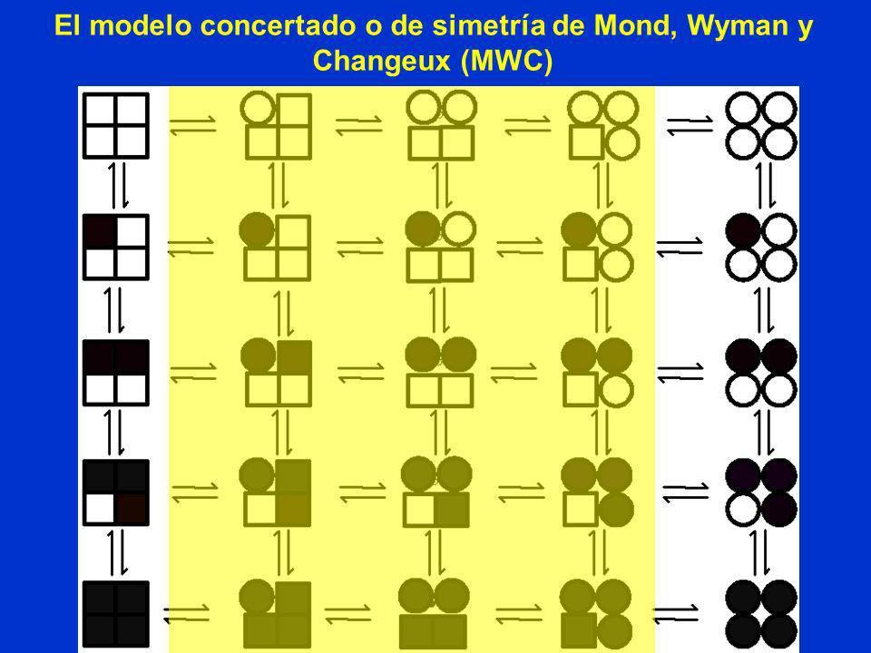El modelo concertado o de simetría de Mond, Wyman y Changeux (MWC)