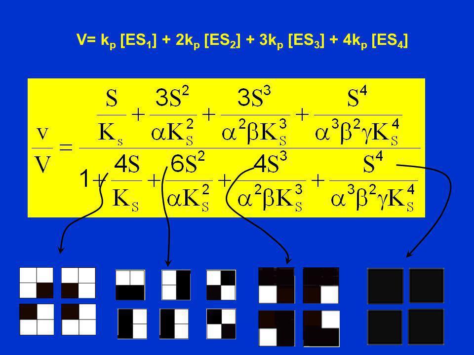 V= k p [ES 1 ] + 2k p [ES 2 ] + 3k p [ES 3 ] + 4k p [ES 4 ]