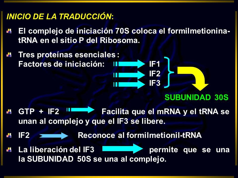 INICIO DE LA TRADUCCIÓN: El complejo de iniciación 70S coloca el formilmetionina- tRNA en el sitio P del Ribosoma. Tres proteínas esenciales : Factore