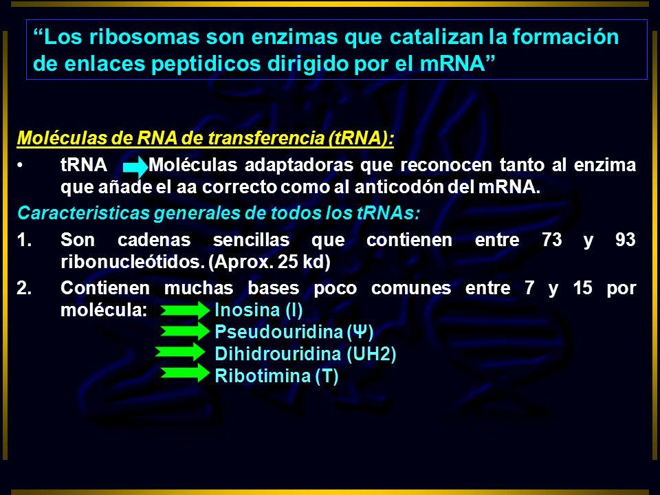 Moléculas de RNA de transferencia (tRNA): tRNAMoléculas adaptadoras que reconocen tanto al enzima que añade el aa correcto como al anticodón del mRNA.