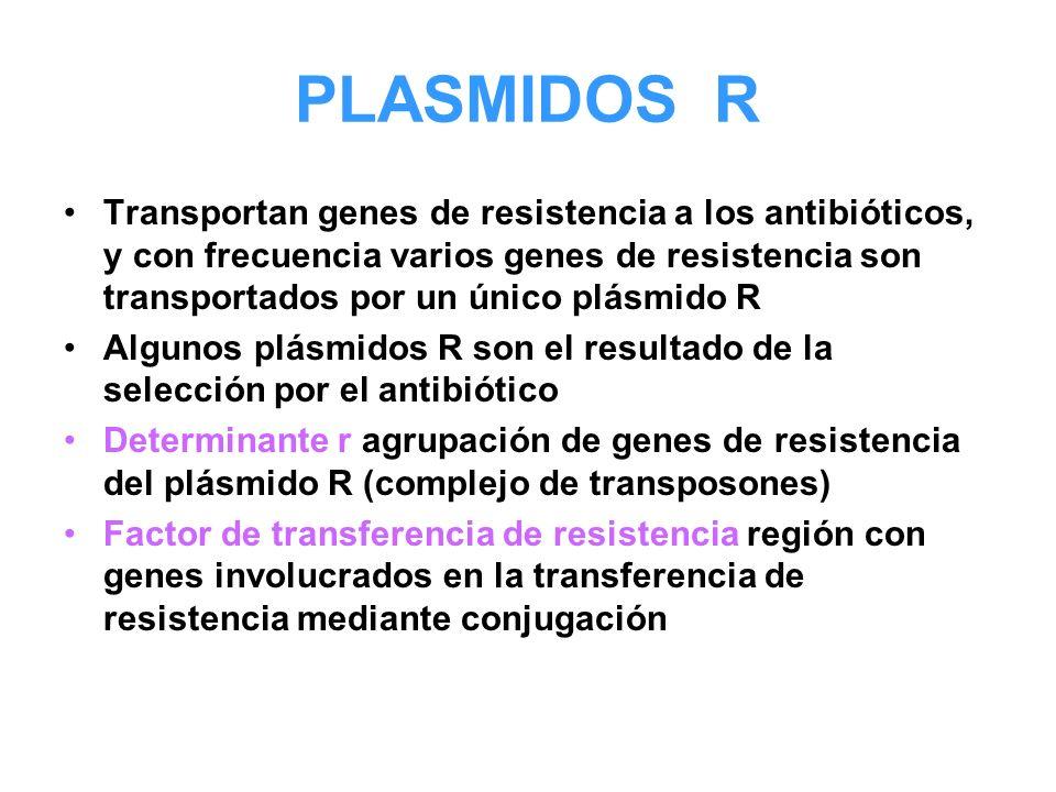 PLASMIDOS R Transportan genes de resistencia a los antibióticos, y con frecuencia varios genes de resistencia son transportados por un único plásmido