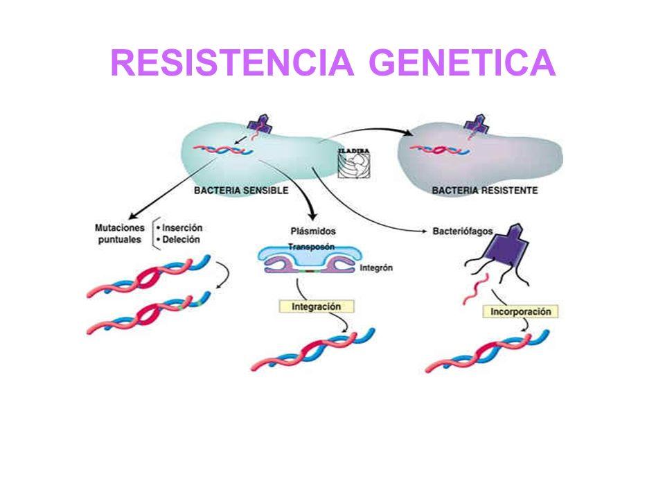 RESISTENCIA GENETICA