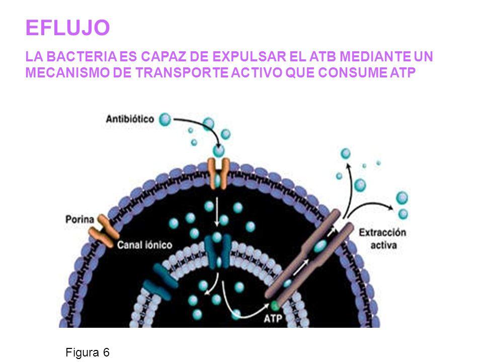 Figura 6 EFLUJO LA BACTERIA ES CAPAZ DE EXPULSAR EL ATB MEDIANTE UN MECANISMO DE TRANSPORTE ACTIVO QUE CONSUME ATP