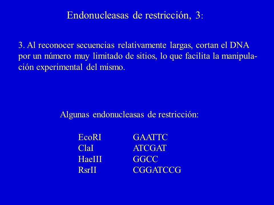 Endonucleasas de restricción, 3 : 3. Al reconocer secuencias relativamente largas, cortan el DNA por un número muy limitado de sitios, lo que facilita