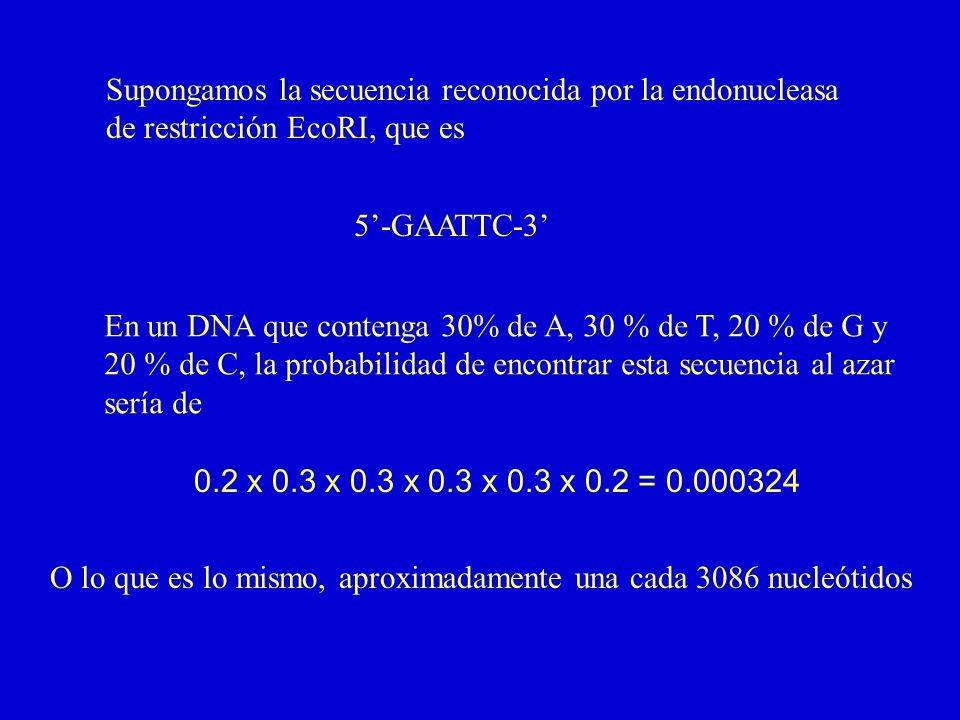 Supongamos la secuencia reconocida por la endonucleasa de restricción EcoRI, que es 5-GAATTC-3 En un DNA que contenga 30% de A, 30 % de T, 20 % de G y 20 % de C, la probabilidad de encontrar esta secuencia al azar sería de 0.2 x 0.3 x 0.3 x 0.3 x 0.3 x 0.2 = 0.000324 O lo que es lo mismo, aproximadamente una cada 3086 nucleótidos