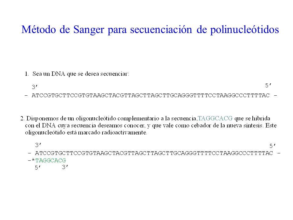 Método de Sanger para secuenciación de polinucleótidos