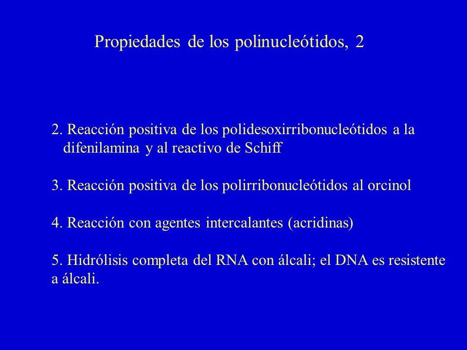 Propiedades de los polinucleótidos, 2 2.