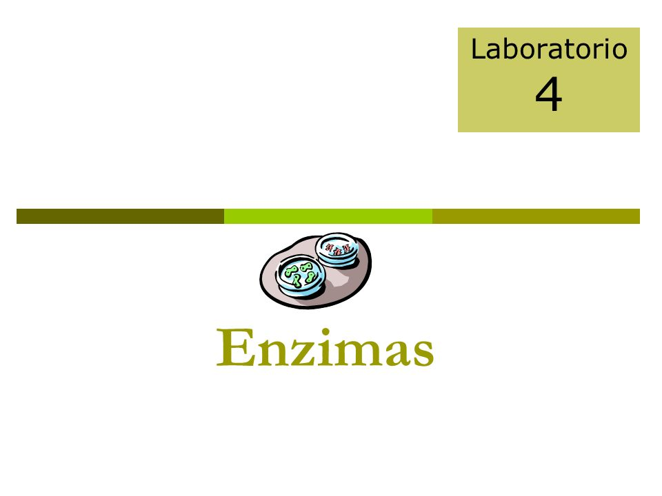 Enzimas Laboratorio 4