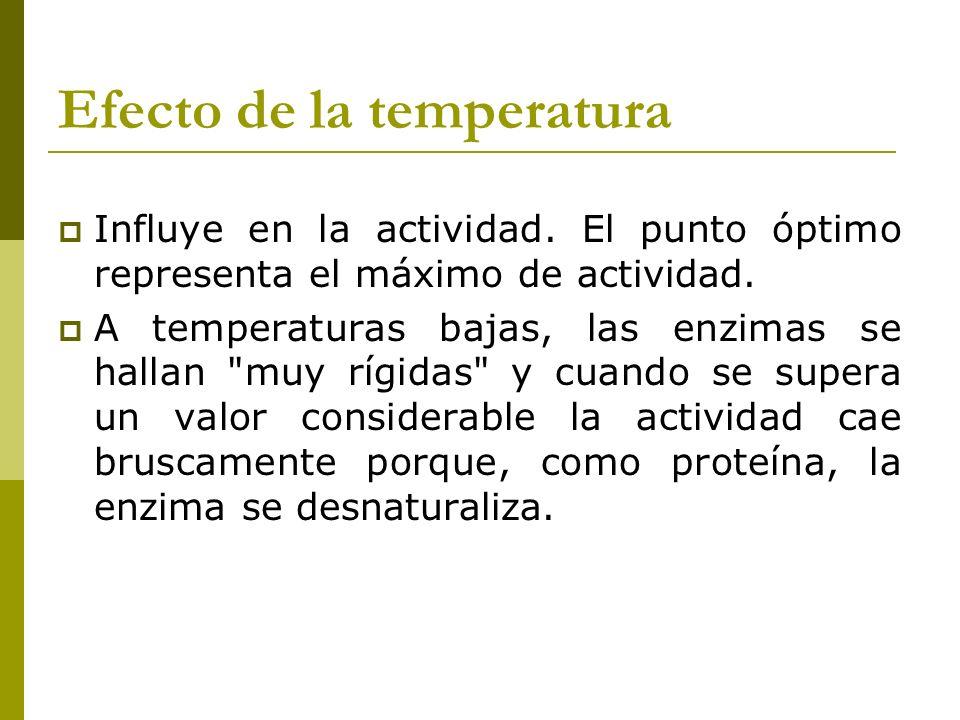 Efecto de la temperatura Influye en la actividad. El punto óptimo representa el máximo de actividad. A temperaturas bajas, las enzimas se hallan