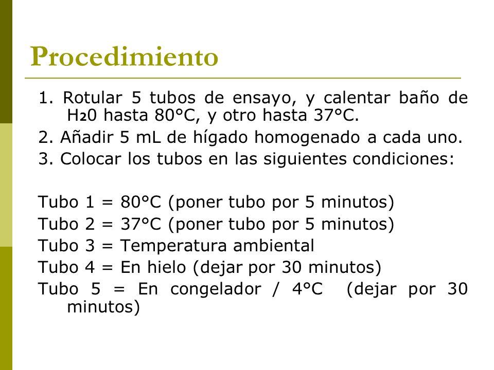 Procedimiento 1. Rotular 5 tubos de ensayo, y calentar baño de H 2 0 hasta 80°C, y otro hasta 37°C. 2. Añadir 5 mL de hígado homogenado a cada uno. 3.