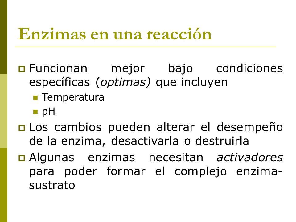 Enzimas en una reacción Funcionan mejor bajo condiciones específicas (optimas) que incluyen Temperatura pH Los cambios pueden alterar el desempeño de