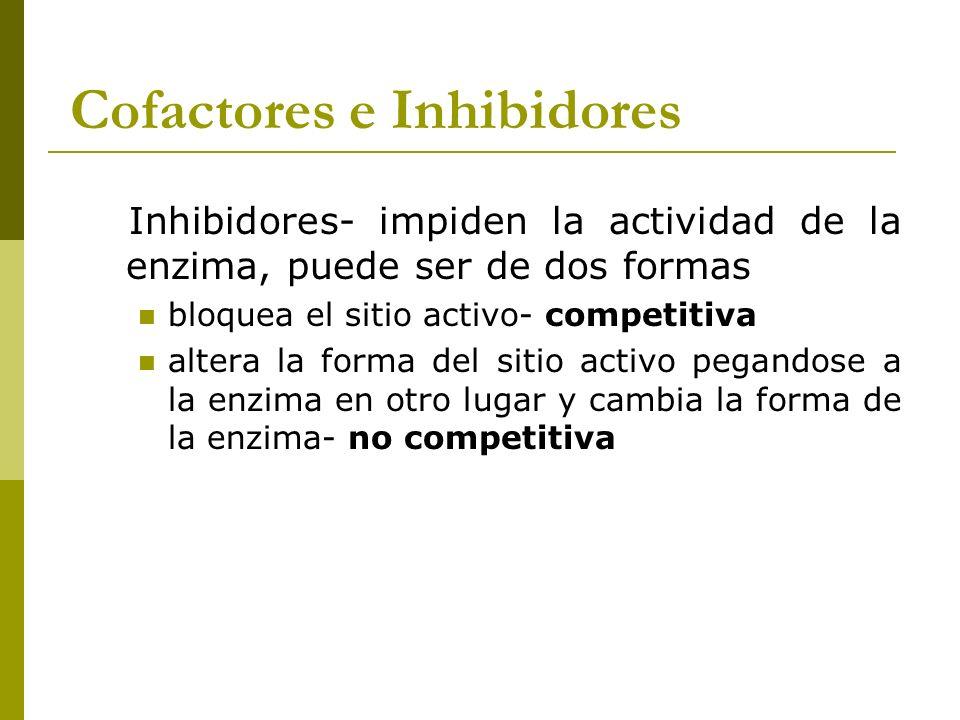 Cofactores e Inhibidores Inhibidores- impiden la actividad de la enzima, puede ser de dos formas bloquea el sitio activo- competitiva altera la forma