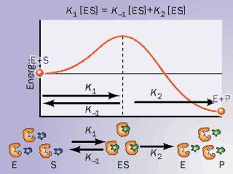 Se realiza la reacción catalítica