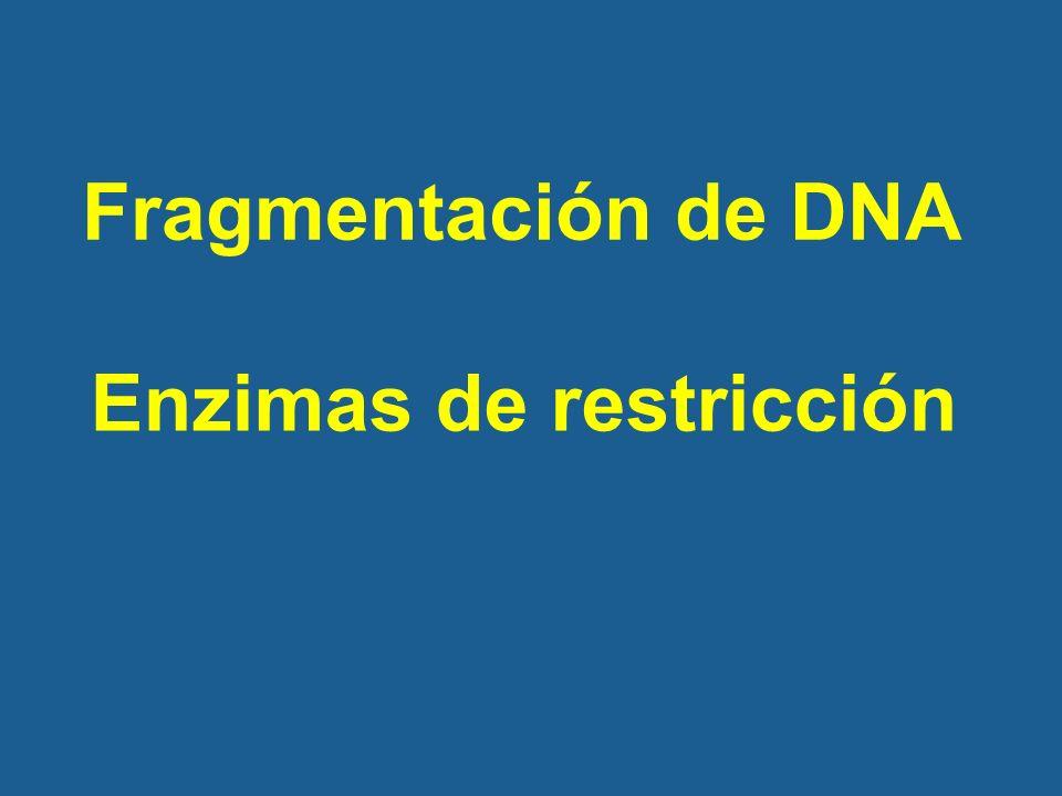 Truco para favorecer la formación de recombinantes Impedir la religación del vector