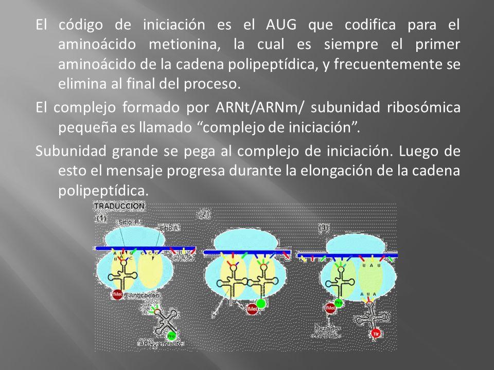 El código de iniciación es el AUG que codifica para el aminoácido metionina, la cual es siempre el primer aminoácido de la cadena polipeptídica, y fre