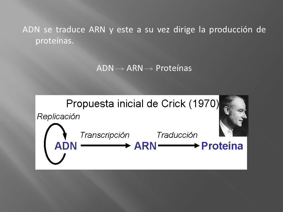 Hipertextos del Área de Biología.Síntesis Proteíca.
