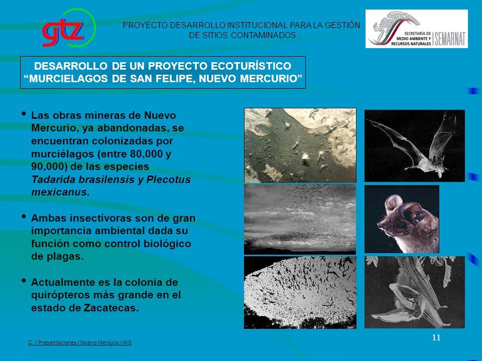 11 DESARROLLO DE UN PROYECTO ECOTURÍSTICO MURCIELAGOS DE SAN FELIPE, NUEVO MERCURIO Las obras mineras de Nuevo Mercurio, ya abandonadas, se encuentran