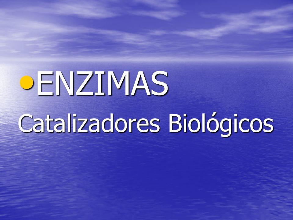 ENZIMAS ENZIMAS Catalizadores Biológicos