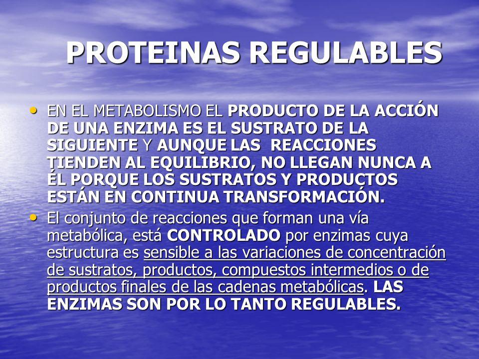 PROTEINAS REGULABLES PROTEINAS REGULABLES EN EL METABOLISMO EL PRODUCTO DE LA ACCIÓN DE UNA ENZIMA ES EL SUSTRATO DE LA SIGUIENTE Y AUNQUE LAS REACCIO