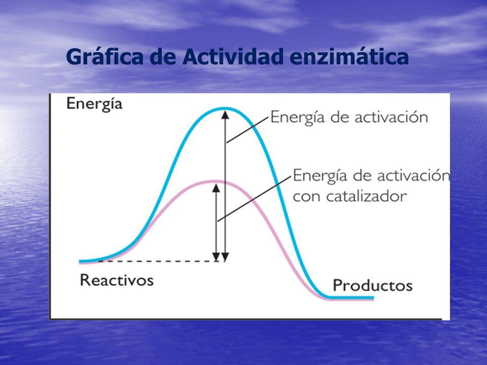 ENZIMAS ENZIMAS Son catalizadores biológicos que permiten que las reacciones metabólicas ocurran a gran velocidad en condiciones compatibles con la vida.