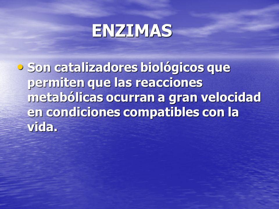 ENZIMAS ENZIMAS Son catalizadores biológicos que permiten que las reacciones metabólicas ocurran a gran velocidad en condiciones compatibles con la vi
