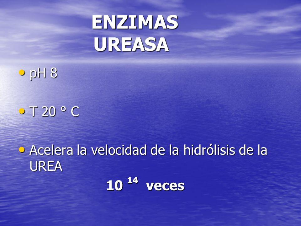 ENZIMAS UREASA ENZIMAS UREASA pH 8 pH 8 T 20 ° C T 20 ° C Acelera la velocidad de la hidrólisis de la UREA Acelera la velocidad de la hidrólisis de la