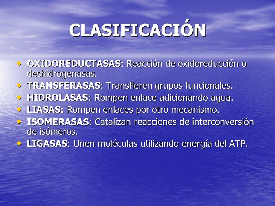 CLASIFICACIÓN CLASIFICACIÓN OXIDOREDUCTASAS: Reacción de oxidoreducción o deshidrogenasas. OXIDOREDUCTASAS: Reacción de oxidoreducción o deshidrogenas