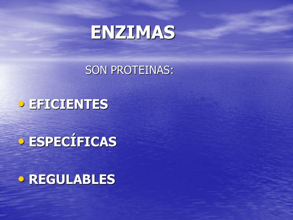 ENZIMAS ENZIMAS SON PROTEINAS: SON PROTEINAS: EFICIENTES EFICIENTES ESPECÍFICAS ESPECÍFICAS REGULABLES REGULABLES