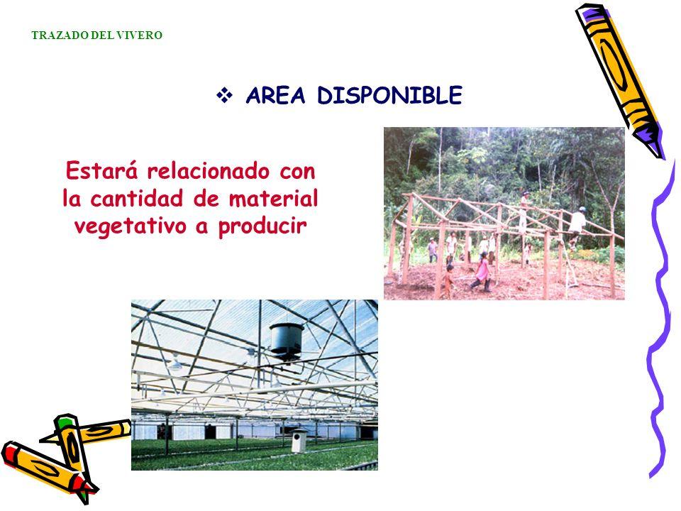 AREA DISPONIBLE TRAZADO DEL VIVERO Estará relacionado con la cantidad de material vegetativo a producir
