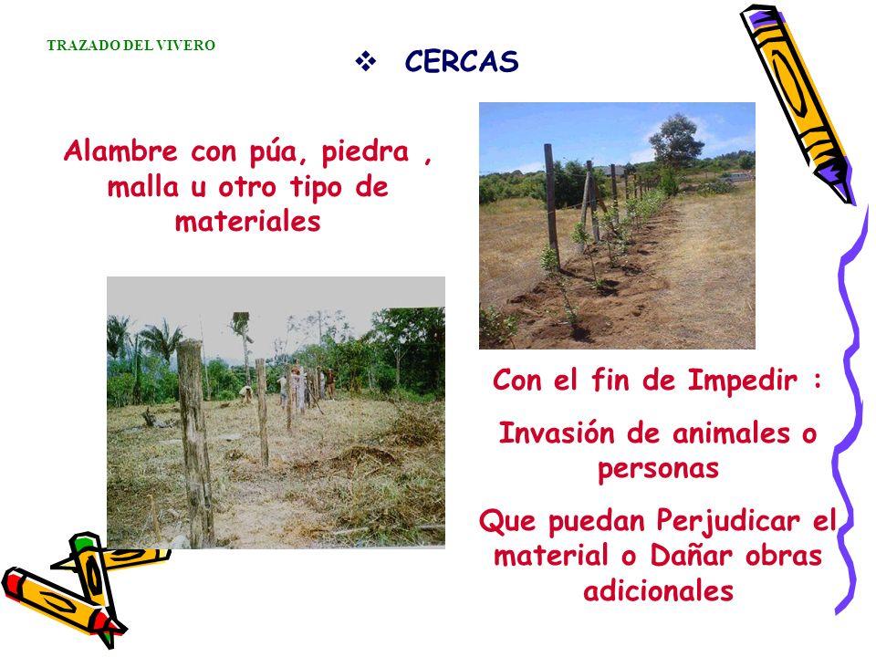 CERCAS Alambre con púa, piedra, malla u otro tipo de materiales Con el fin de Impedir : Invasión de animales o personas Que puedan Perjudicar el mater
