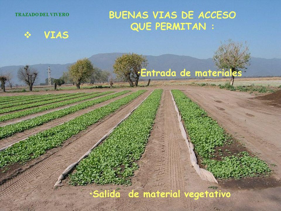 VIAS BUENAS VIAS DE ACCESO QUE PERMITAN : TRAZADO DEL VIVERO Entrada de materiales Salida de material vegetativo