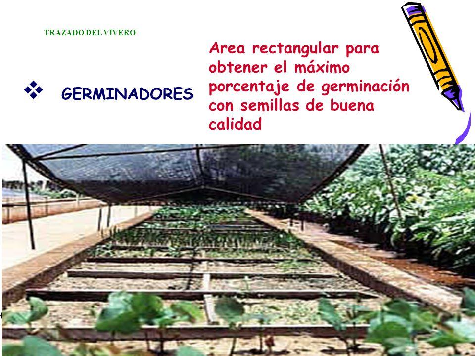 GERMINADORES Area rectangular para obtener el máximo porcentaje de germinación con semillas de buena calidad TRAZADO DEL VIVERO