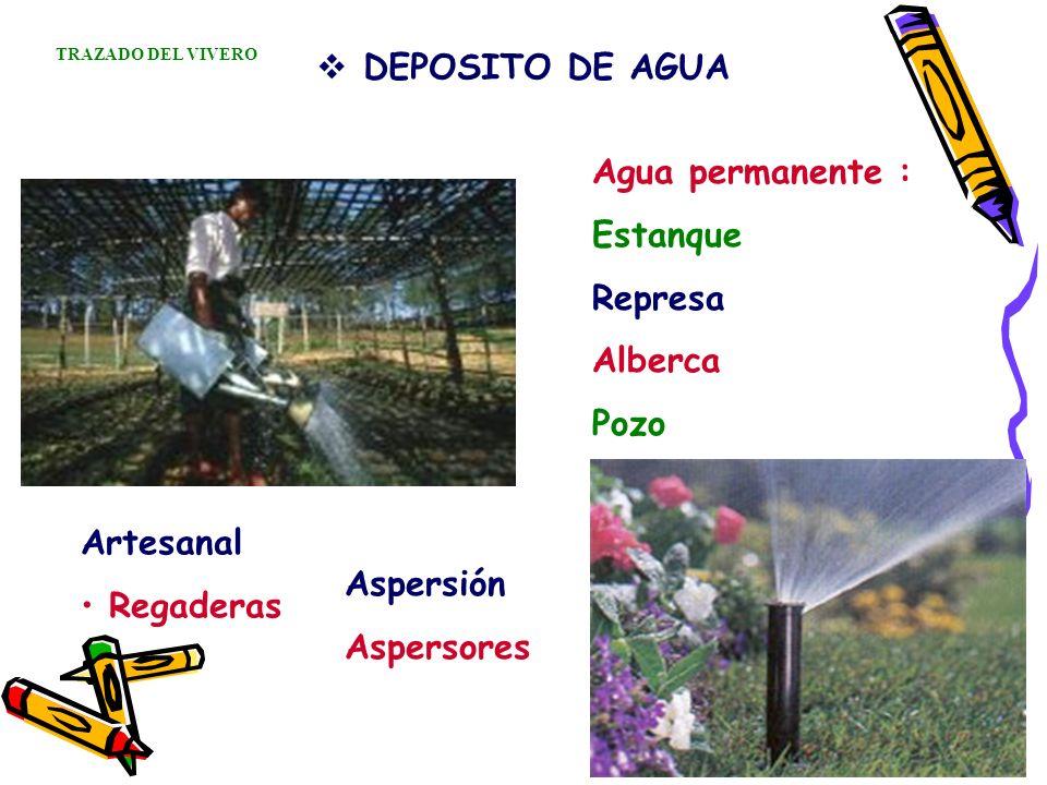 DEPOSITO DE AGUA Agua permanente : Estanque Represa Alberca Pozo Artesanal Regaderas Aspersión Aspersores TRAZADO DEL VIVERO