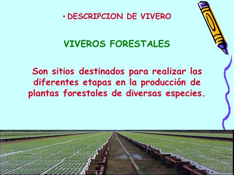 Son sitios destinados para realizar las diferentes etapas en la producción de plantas forestales de diversas especies. VIVEROS FORESTALES DESCRIPCION