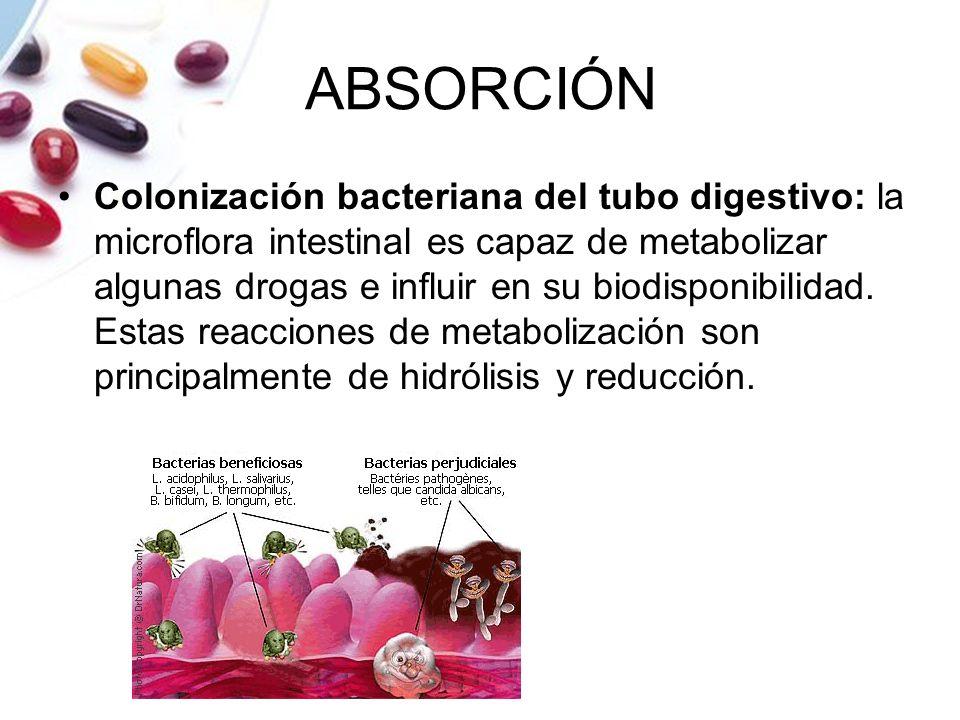 ABSORCIÓN Colonización bacteriana del tubo digestivo: la microflora intestinal es capaz de metabolizar algunas drogas e influir en su biodisponibilida