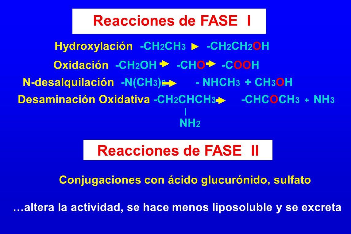 Hydroxylación -CH 2 CH 3 -CH 2 CH 2 OH Oxidación -CH 2 OH -CHO -COOH N-desalquilación -N(CH 3 ) 2 - NHCH 3 + CH 3 OH Desaminación Oxidativa -CH 2 CHCH