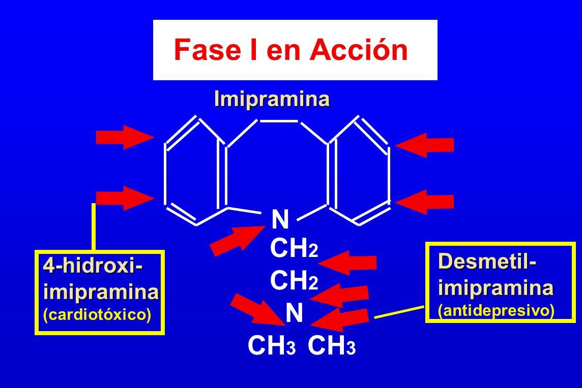 Fase I en Acción N CH 2 N CH 3 Desmetil-imipramina (antidepresivo) 4-hidroxi-imipramina (cardiotóxico) Imipramina