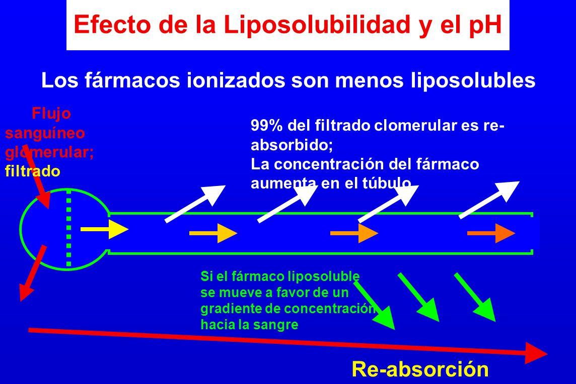 Efecto de la Liposolubilidad y el pH Flujo sanguíneo glomerular; filtrado 99% del filtrado clomerular es re- absorbido; La concentración del fármaco a