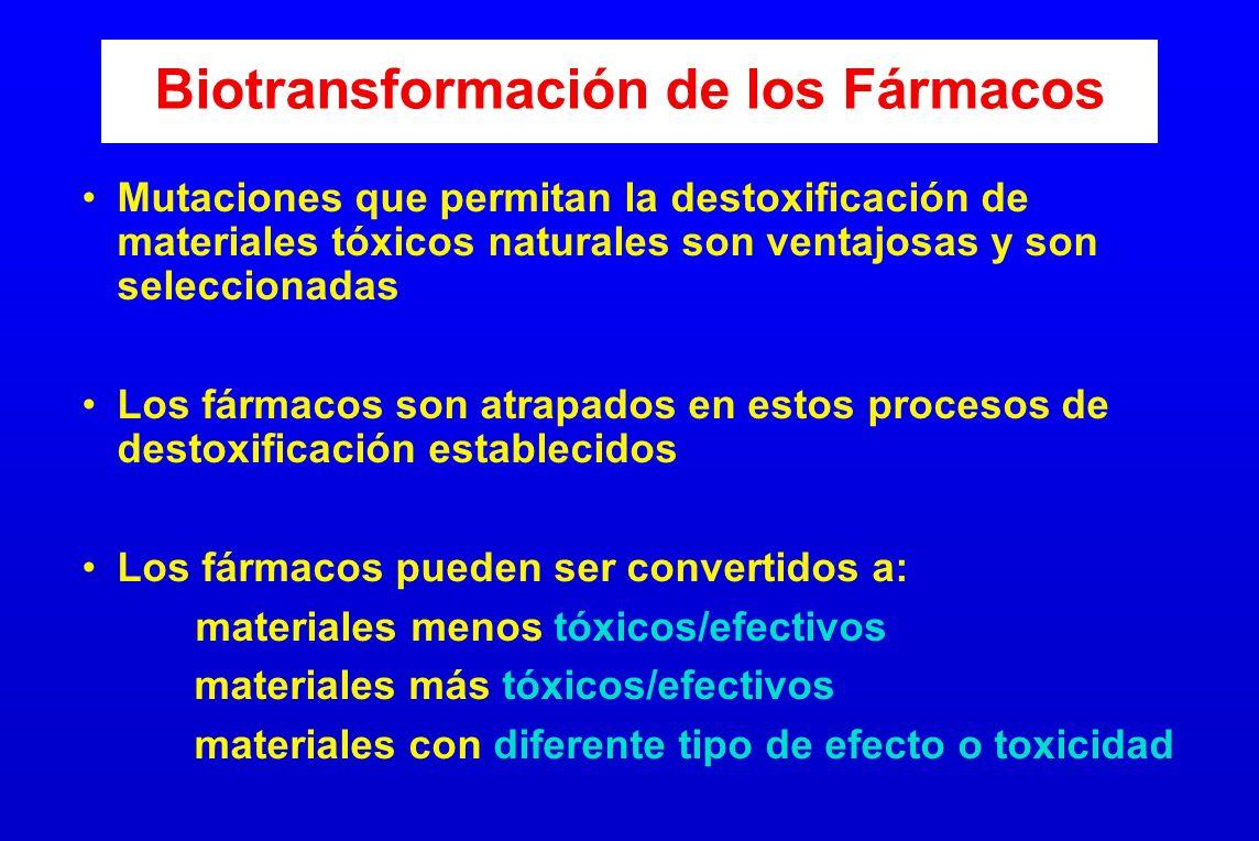 Biotransformación de los Fármacos Mutaciones que permitan la destoxificación de materiales tóxicos naturales son ventajosas y son seleccionadas Los fá