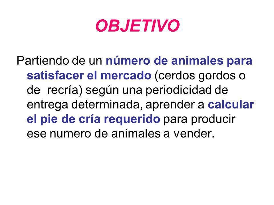 OBJETIVO Partiendo de un número de animales para satisfacer el mercado (cerdos gordos o de recría) según una periodicidad de entrega determinada, apre