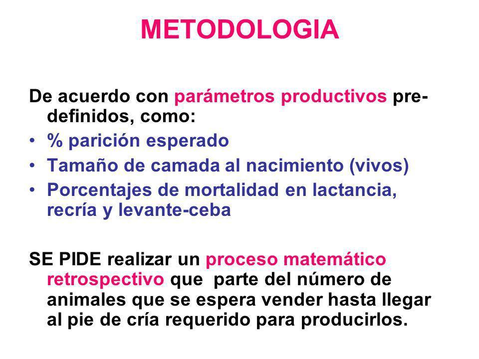 METODOLOGIA De acuerdo con parámetros productivos pre- definidos, como: % parición esperado Tamaño de camada al nacimiento (vivos) Porcentajes de mort