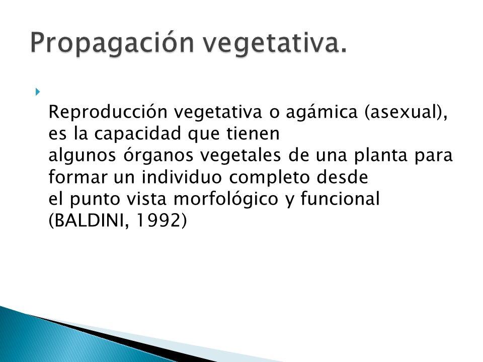 Reproducción vegetativa o agámica (asexual), es la capacidad que tienen algunos órganos vegetales de una planta para formar un individuo completo desd