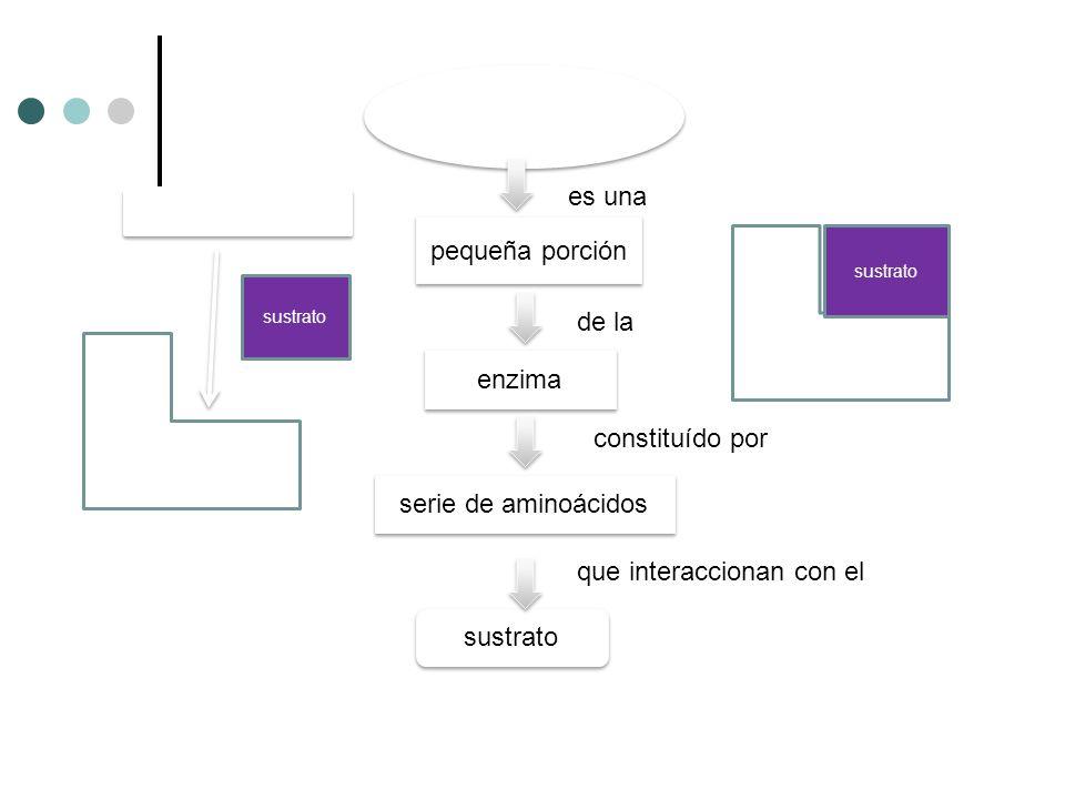 es una pequeña porción de la enzima constituído por serie de aminoácidos que interaccionan con el sustrato Enzima sustrato Sitio activo Enzima sustrat