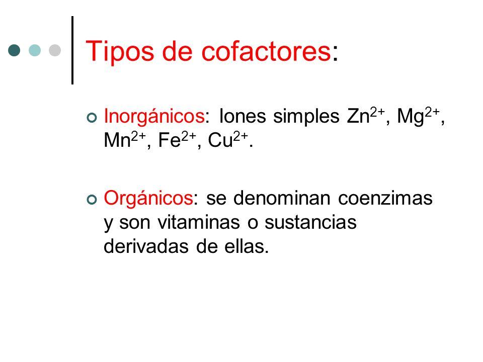 Tipos de cofactores: Inorgánicos: Iones simples Zn 2+, Mg 2+, Mn 2+, Fe 2+, Cu 2+. Orgánicos: se denominan coenzimas y son vitaminas o sustancias deri