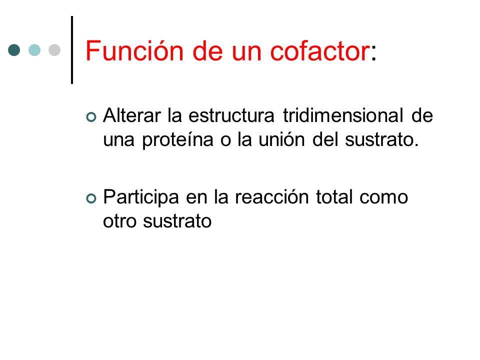Función de un cofactor: Alterar la estructura tridimensional de una proteína o la unión del sustrato. Participa en la reacción total como otro sustrat