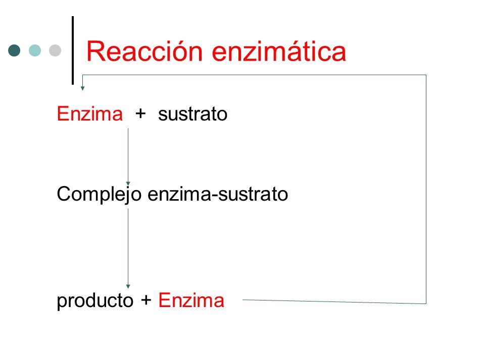 Reacción enzimática Enzima + sustrato Complejo enzima-sustrato producto + Enzima