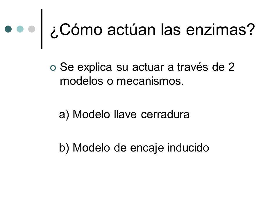 ¿Cómo actúan las enzimas? Se explica su actuar a través de 2 modelos o mecanismos. a) Modelo llave cerradura b) Modelo de encaje inducido