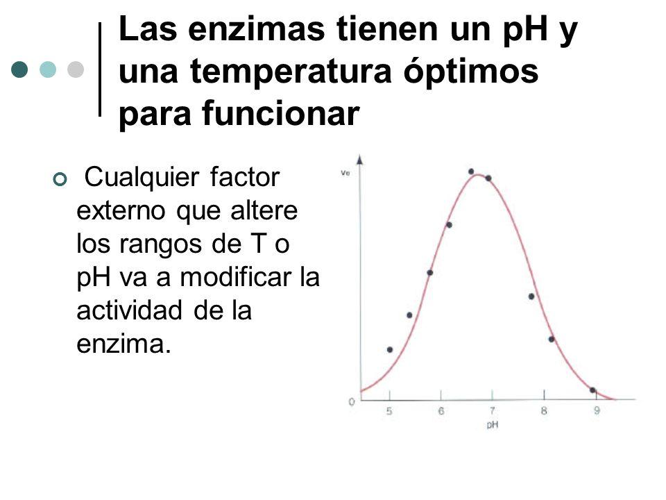 Las enzimas tienen un pH y una temperatura óptimos para funcionar Cualquier factor externo que altere los rangos de T o pH va a modificar la actividad